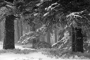 Zima na Skrzycznem
