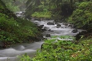 Potok w Beskidzie Wyspowym