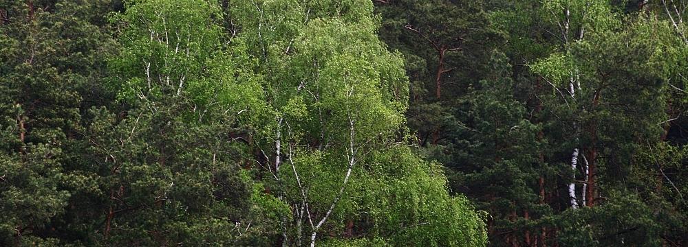 T.Podgorska_polskie_drzewa