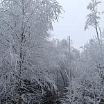 Grudzień 2008 - biały las