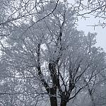 Grudzień 2008 - drzewa w szadzi