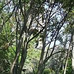 Sierpień 2009 wieża widokowa