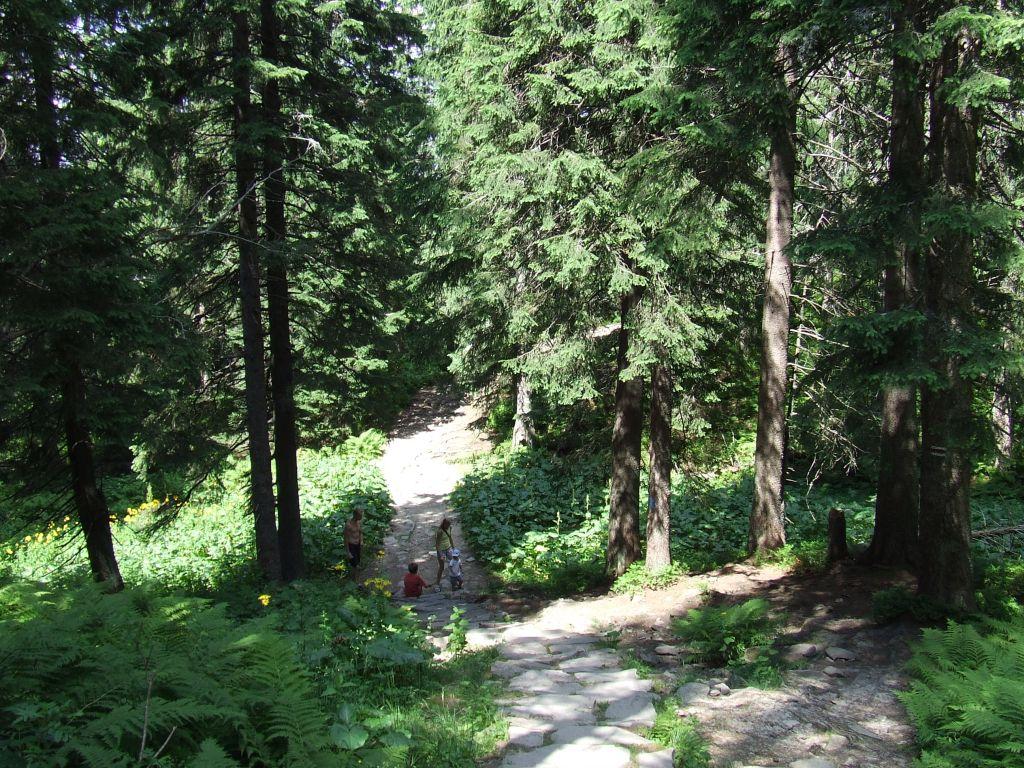 Odpoczynek w lesie