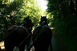 konie ruszyły ... okazało się, że dla nich nie była to tak przyjemna wycieczka jak dla nas