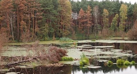 jezioro leśne w okolicach Rzepina