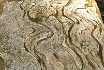 wady drewna19