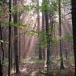 puszczańskie klimaty