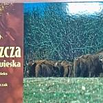 puszcza3