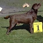 wystawa psów 1
