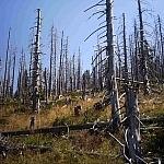 Tak wyglądał las w 2001 r.