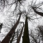 te drzewa budą szacunek