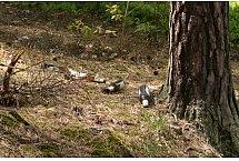 W lesie koło Zielonej Góry, fot. Teresa Podgórska