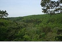las w Górach Kaczawskich