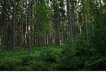 las- góry bardzkie