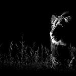 copyright: Andrew Schoeman  -  RPA  -  Zdjęcie w ciemności