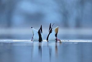 fot. Piotr Chara