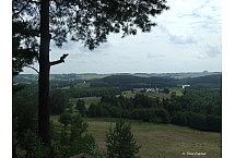 sosny suwalszczyzna 2007 (1)