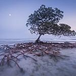 Strażnik plaży, fot, Mac Stone, USA, źródło: Agencja Zegart