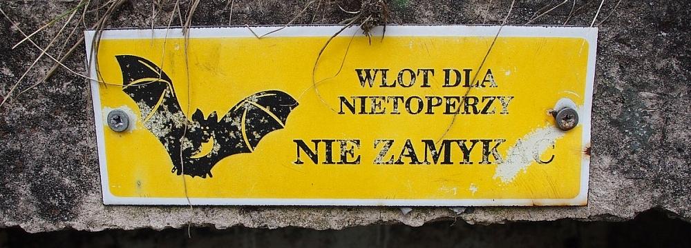 Foto: Rafał Szkopiński
