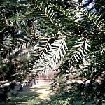 cis - park zachodni wiosna 2014 (6)