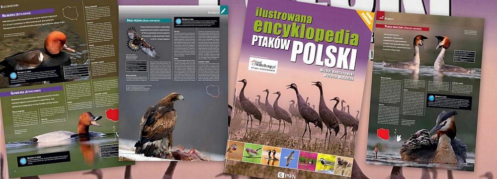 encyklopedia ptaków Matysiak