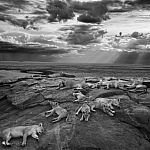 """""""Ostatni taki wspaniały obraz"""", fot. Michael 'Nick' Nichols, źródło: Agencja Zegart"""