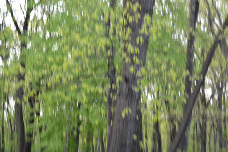Wiatr gra w drzwach, fot. Teresa Podgórska