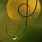 Naturalna harmonia, fot. Minghui Yuan, Chiny, źródło: Agencja Zegart