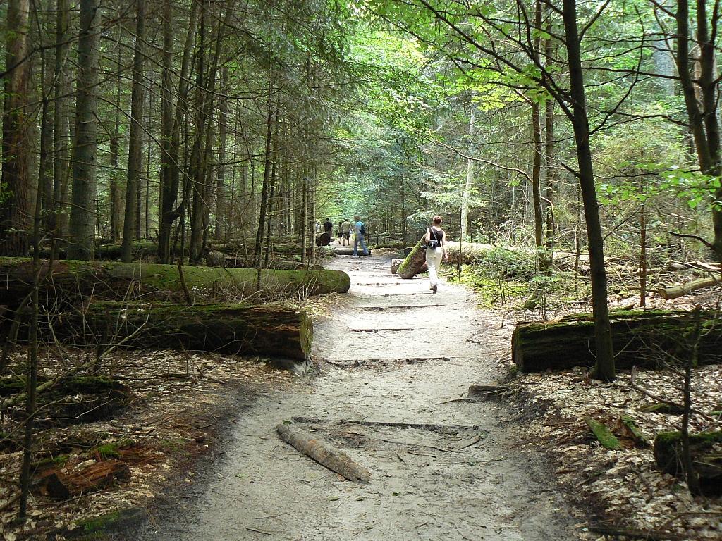 martwe drzewo-roztoczański park narodowy (1)