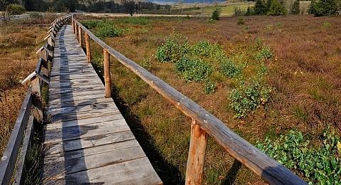 Bieszczadzki Park Narodowy - k³adka na torfowisku Wo³osate