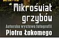 plakat_mikroświat