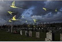 Zwierzęce duchy, fot. Sam Hobson, Wielka Brytania