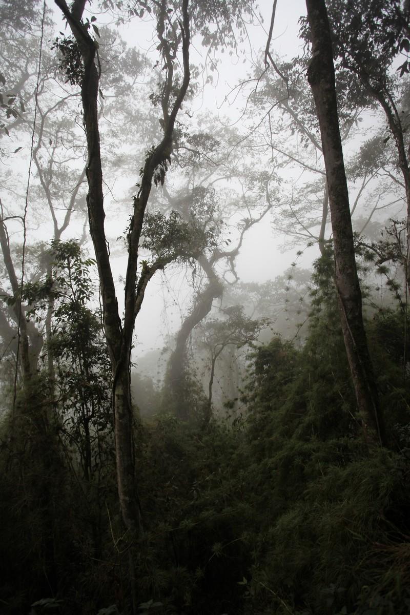 Bujny wielopiętrowy las mglisty