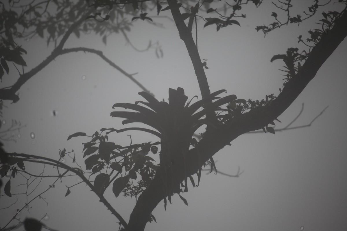 Na drzewach występują liczne epifity, m.in
