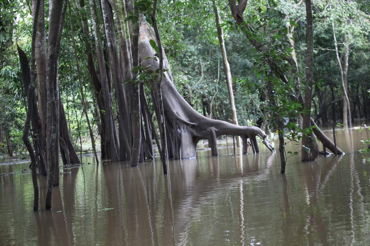 Podtopiony las zalewowy, głębokość wody około 3m