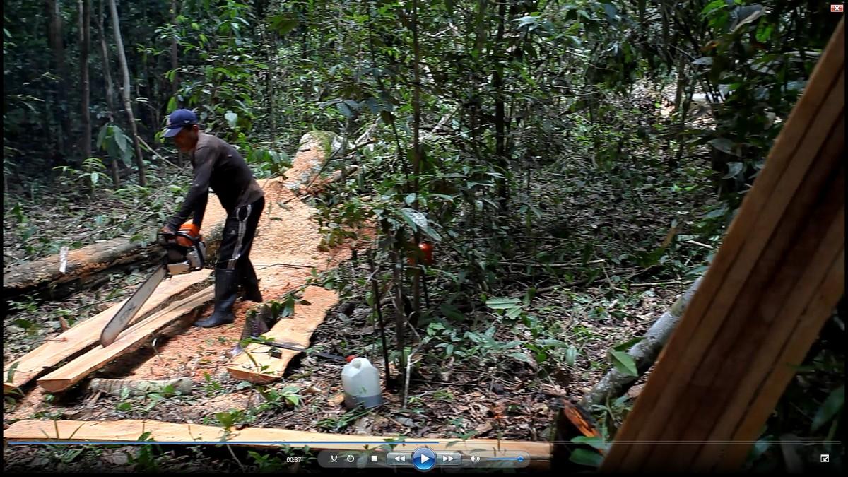 Pozyskiwanie i wstępna obróbka drewna odbywa się w dżungli 2