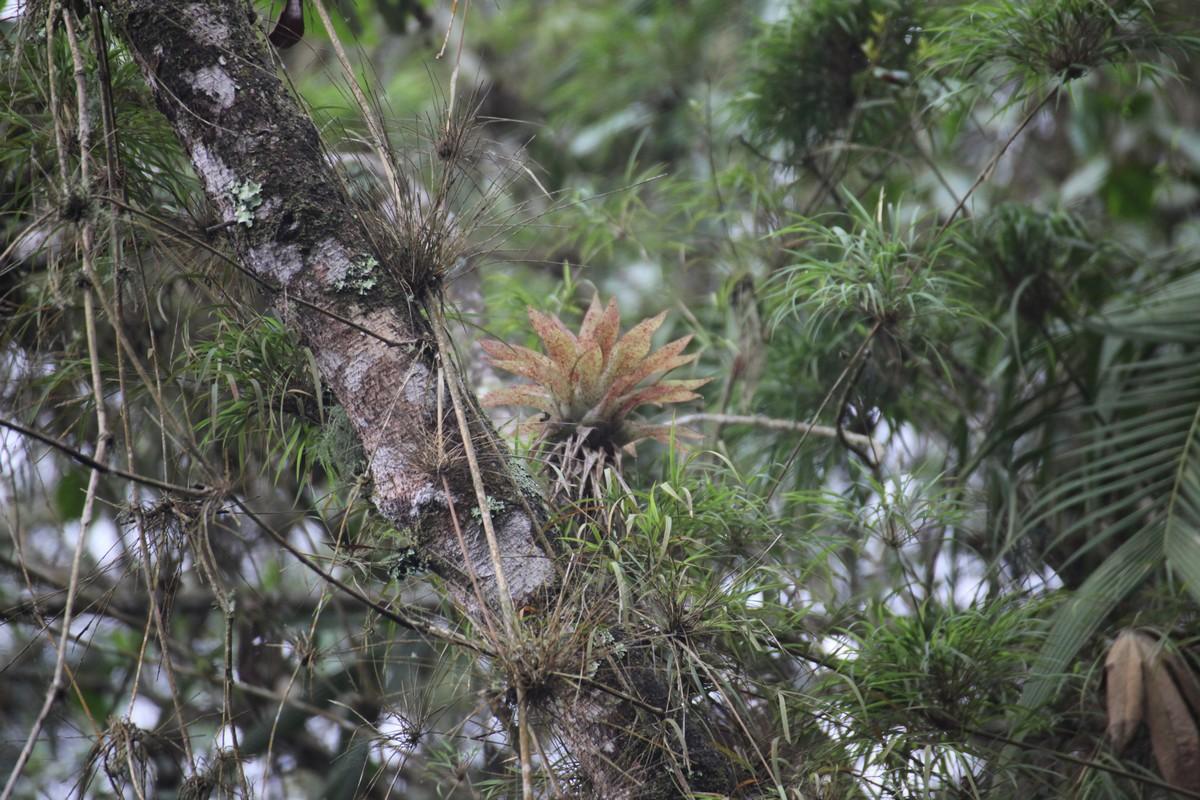 Występują tu liczne epifity i liany