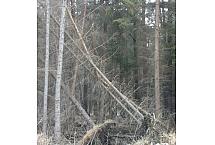 wiatrołom, foto: Rafał Szkopiński