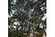1-drzewa -podwórko (26)-001