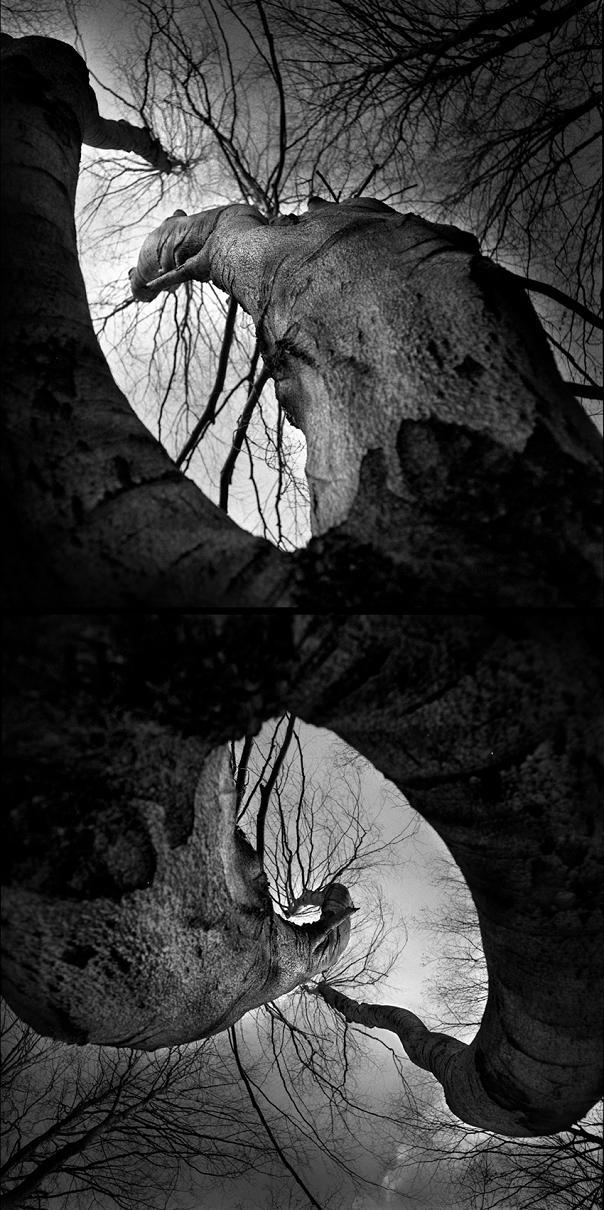 Drzewa - fot. Marek Wesołowski (1)