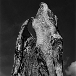 Drzewa - fot. Marek Wesołowski (3)