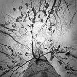 Drzewa - fot. Marek Wesołowski (4)