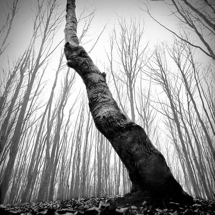 Drzewa - fot. Marek Wesołowski (5)