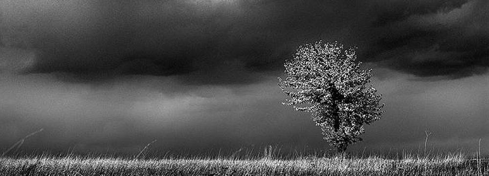 Drzewa - fot. Marek Wesołowski (6)
