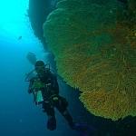 Nurkowanie na Filipinach - fot. Marek Mencel (2)