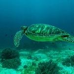 Nurkowanie na Filipinach - fot. Marek Mencel (3)