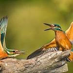 Mój święty spokój - ptaki - fot. Marian Miełek (1)