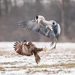 Mój święty spokój - ptaki - fot. Marian Miełek (11)