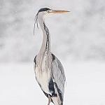 Mój święty spokój - ptaki - fot. Marian Miełek (13)