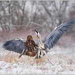 Mój święty spokój - ptaki - fot. Marian Miełek (2)